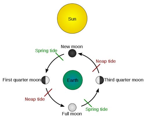 Relating Tides To The Moon Phases Perkins Elearning