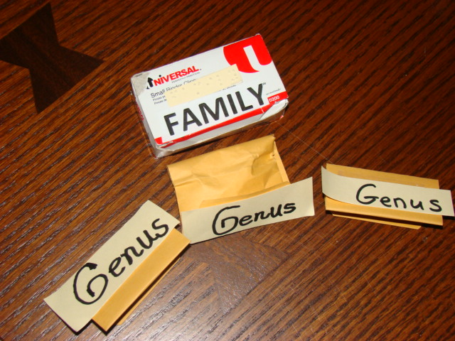 Box representing a  family containing several envelopes representing genera