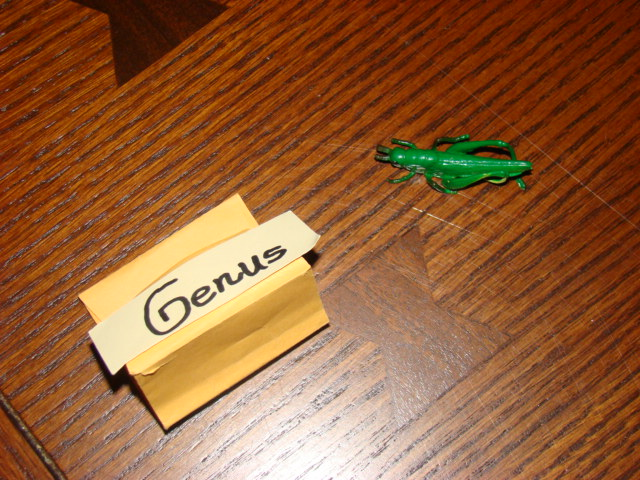 Small envelope representing a genus and grasshopper model representing a species