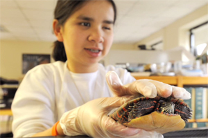 A student holds a turtle above a terrarium.