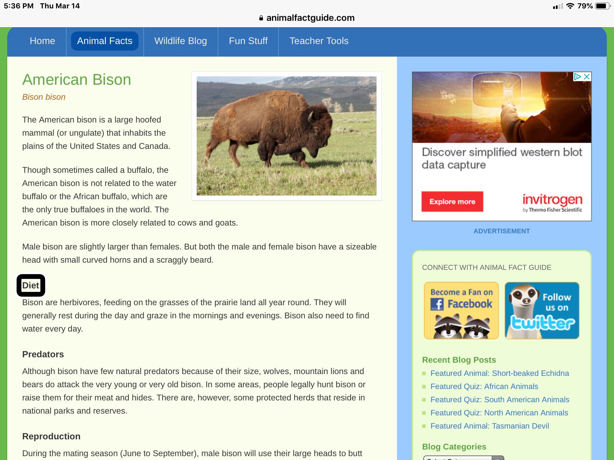 "Screenshot of American Bison website page with the VoiceOver focus on the  Heading Level 4 ""diet"""
