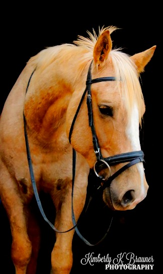 "photo of the head & chest of a palomino horse wearing a dressage bridle with the text, ""Kimberly K. Brauner, Photography"""