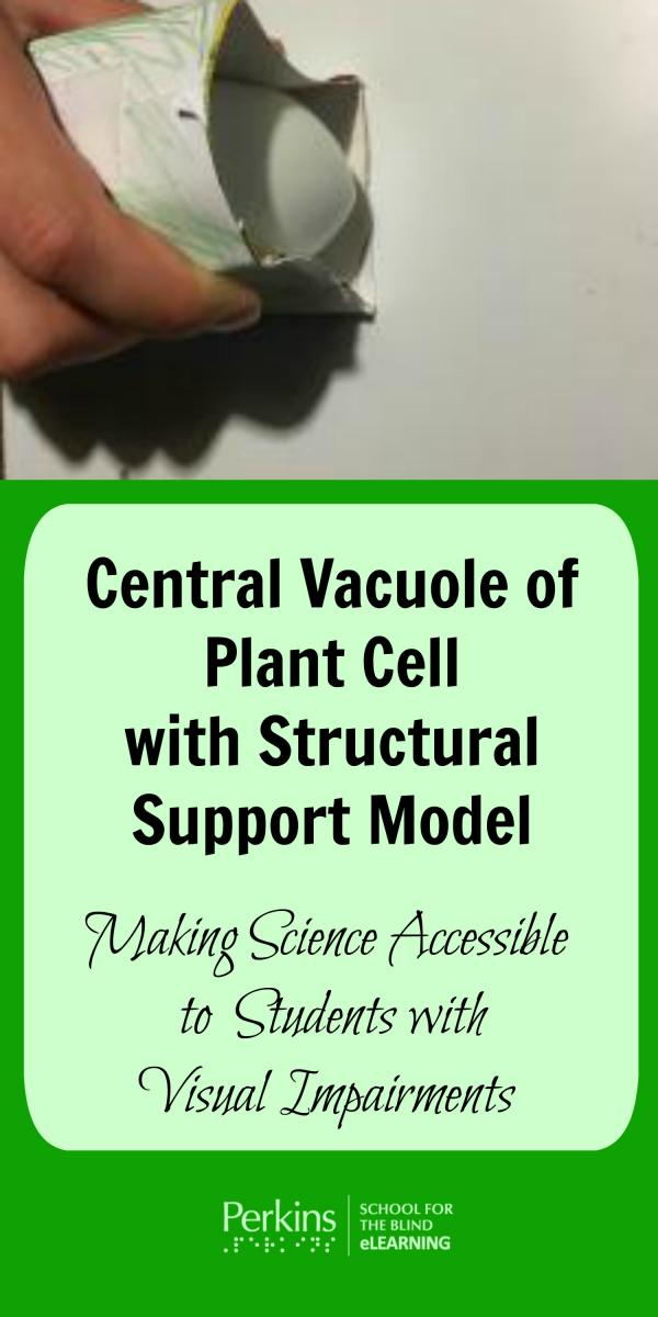 Collage of central vacuole in plant cell with structural support model